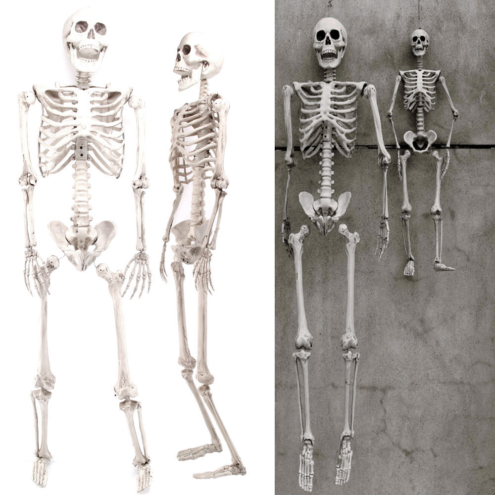 Halloween Prop 5.6Ft Posable Human Full Body Skeleton Life Size Party Decor