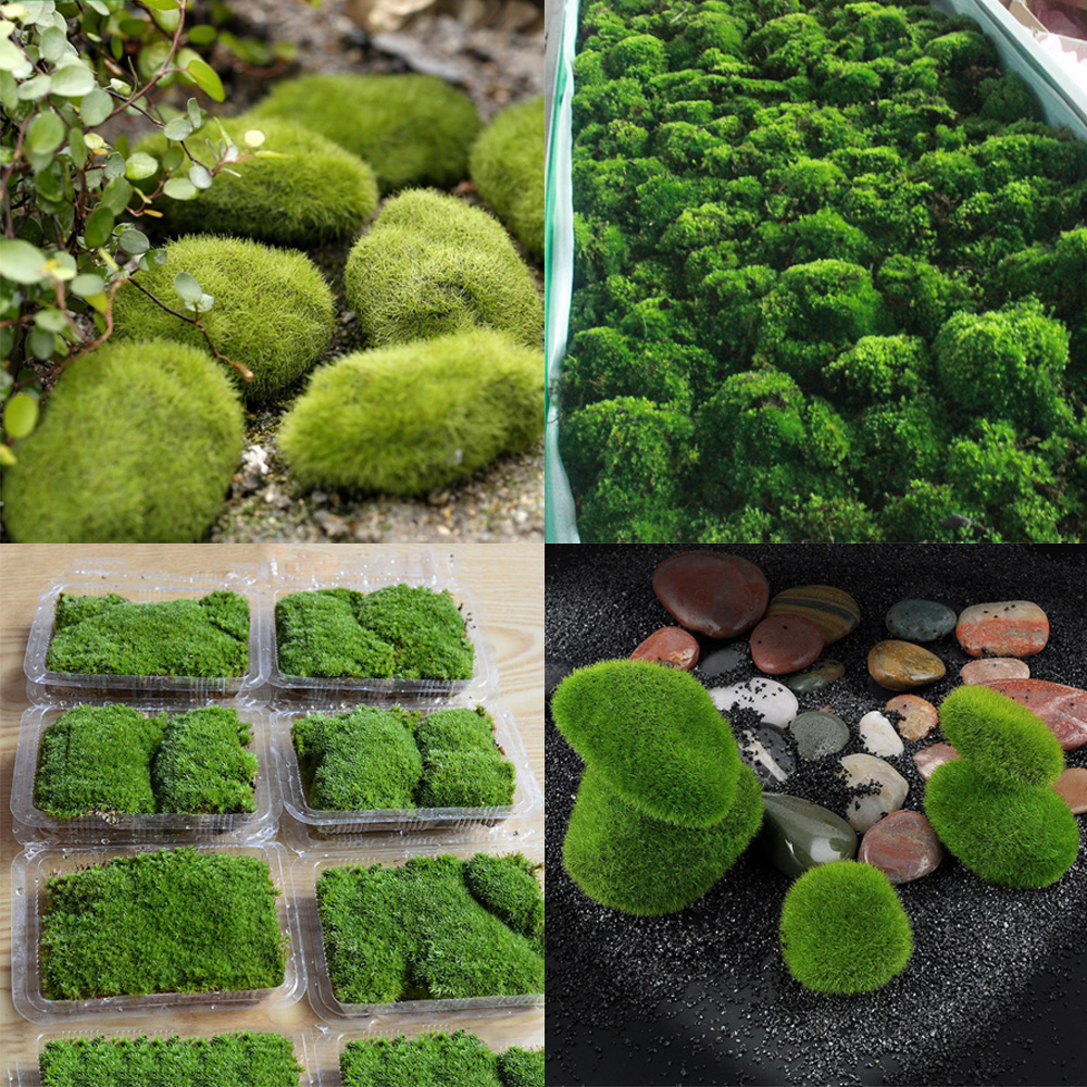 Natural Live Moss Carpet Aquatic Tropical Aquarium Fish Tank
