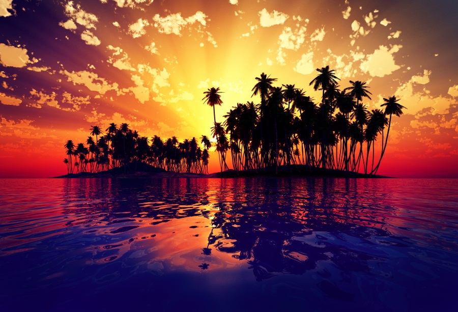 Hd Tropical Island Beach Paradise Wallpapers And Backgrounds: Palm Trees Sunrise Photo Backdrops Tropical Island