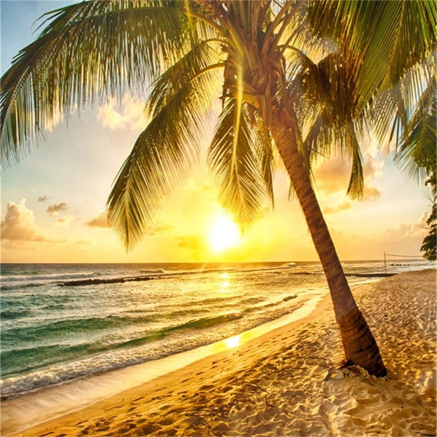 Palm Tree Beach: 6x6ft Seaside Sunset Background Beach Palm Tree Landscape