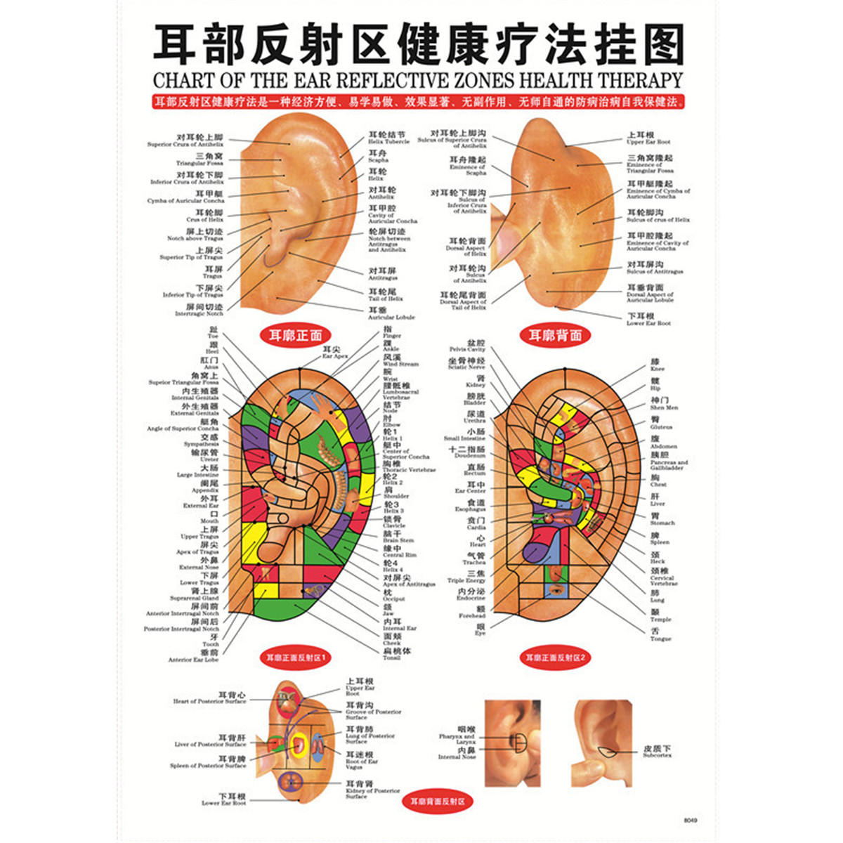 7pcset English Acupuncture Meridian Acupressure Points Posters